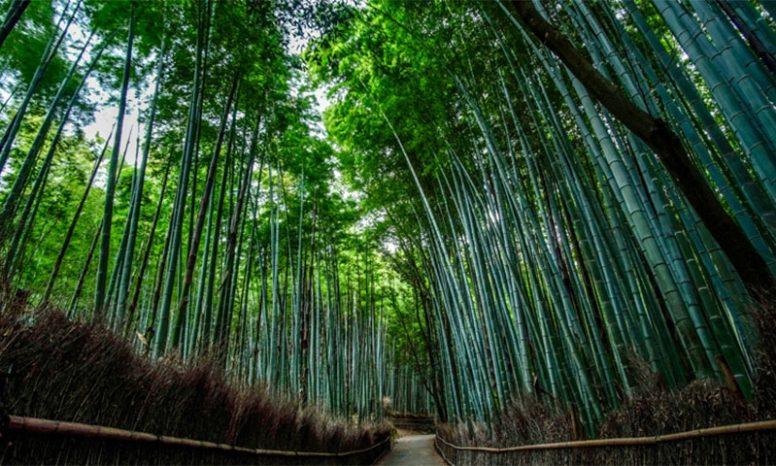 野々宮の竹林
